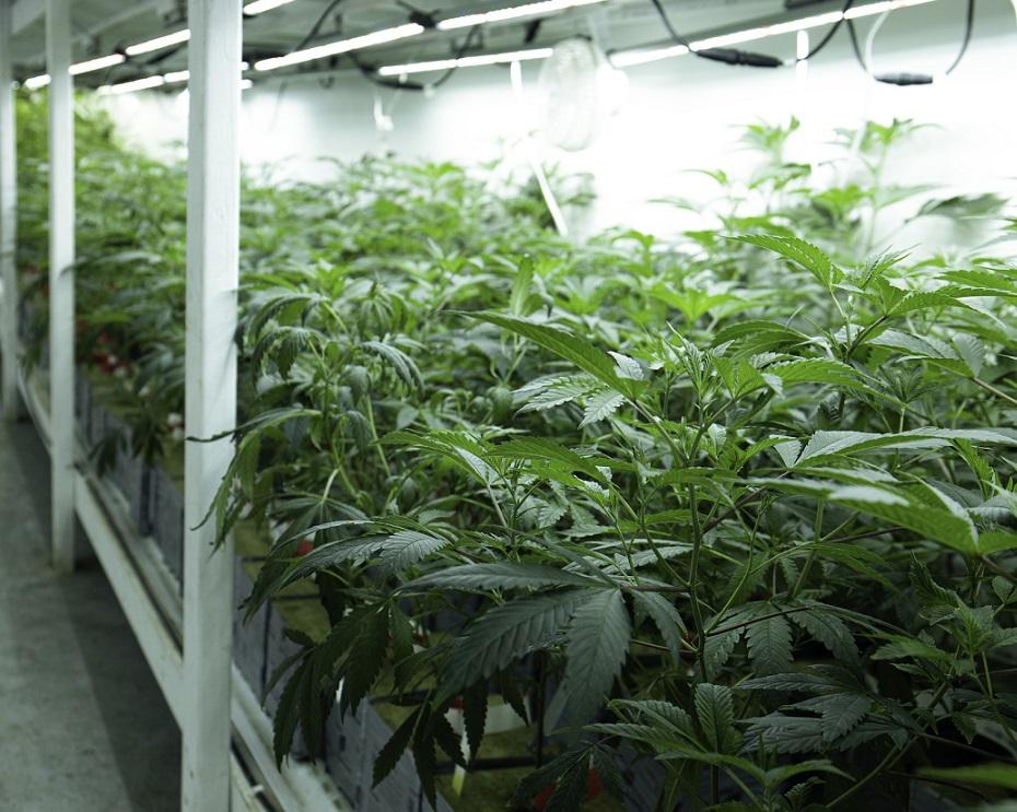 Recreational Cannabis Cultivation Facility